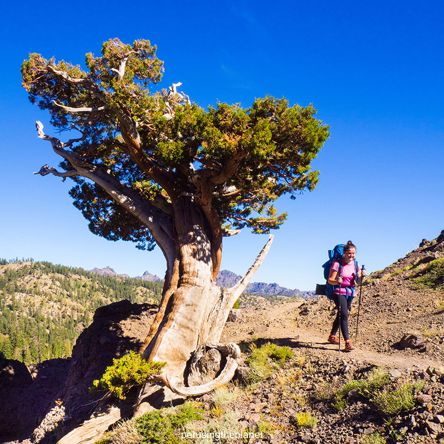 hiking on the pct. pacific crest trail photos