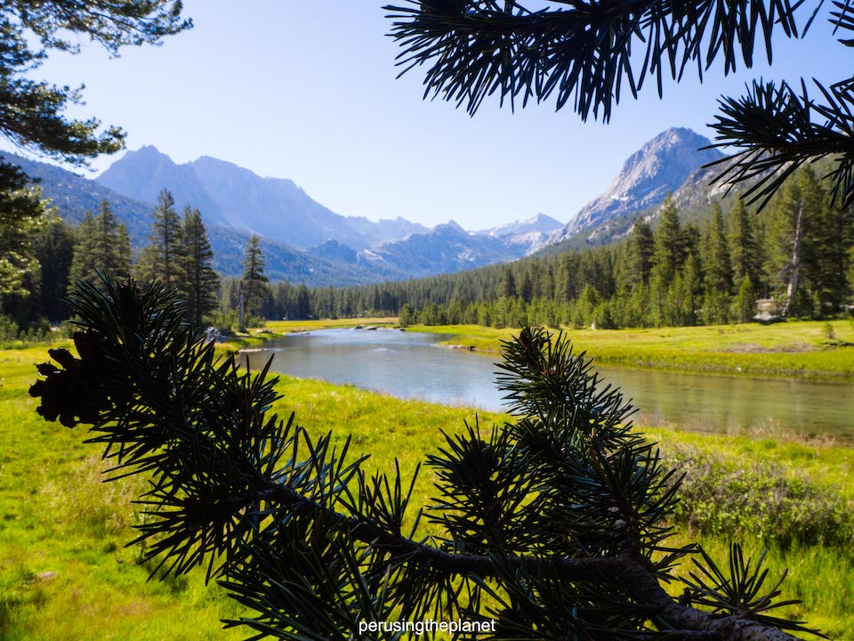 john muir wilderness, looking though pine trees on the pacific crest trail in pictures