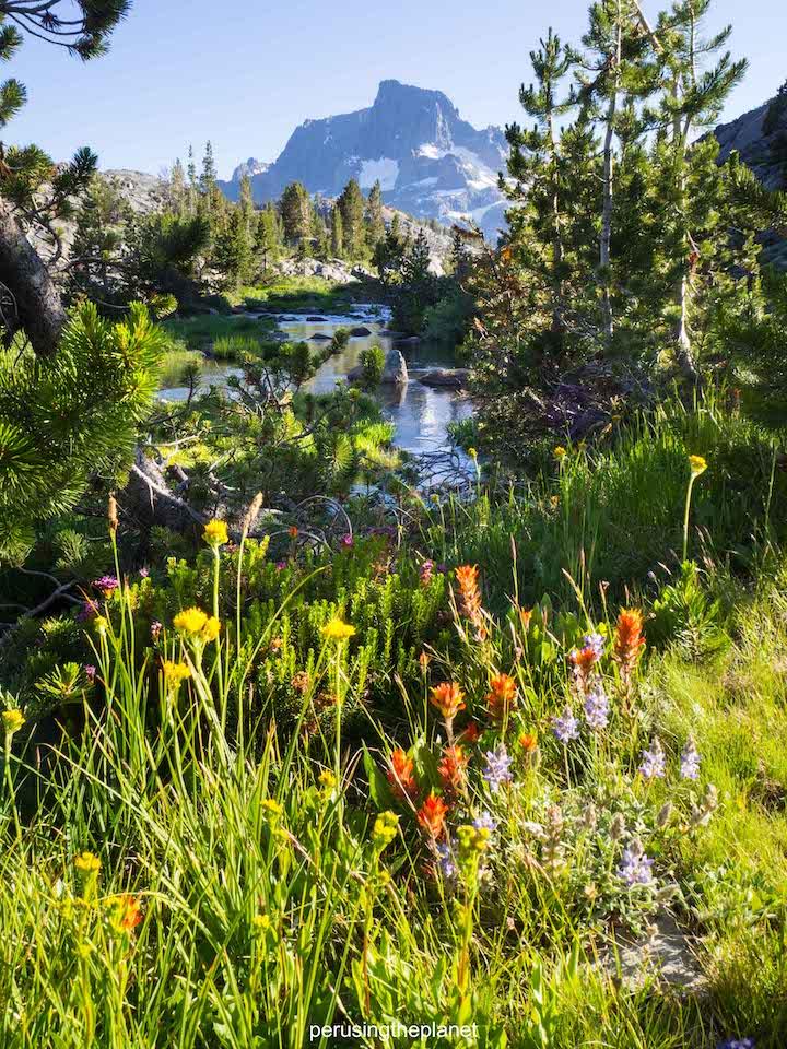 john muir trail, banner peak and flowers