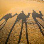jaisalmer camel ride sand dunes in desert