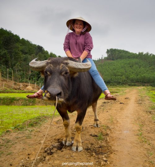riding a buffalo in vietnam