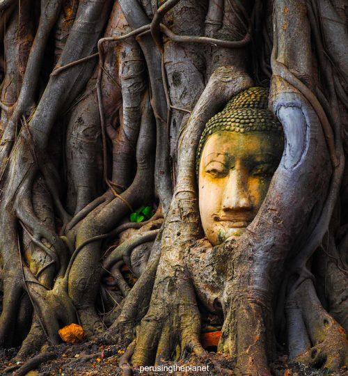 buddha head ayutthaya