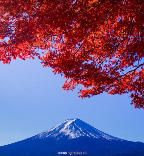 mount fuji autumn fall maple leaves